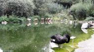 Grugapark7Sept1342.jpg